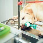 Avaliação da pressão arterial na rotina veterinária